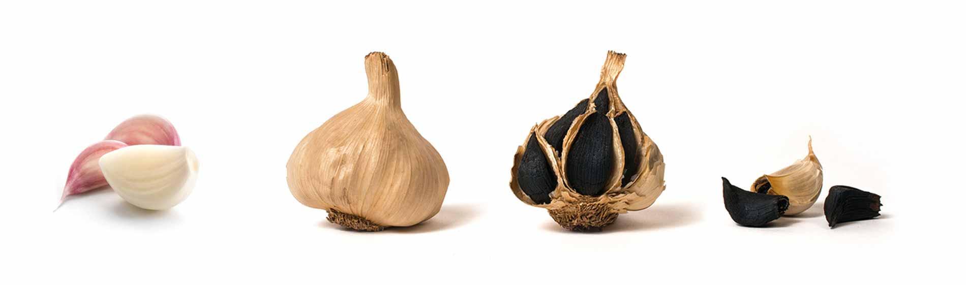 fermentazione aglio nero